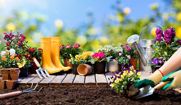 Gardening Starts With Good Soil