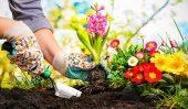 Benefits Of Composting Organic Waste