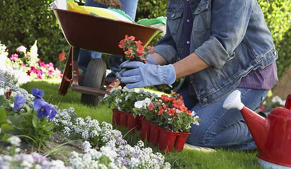 Gardening Basics For Beginners