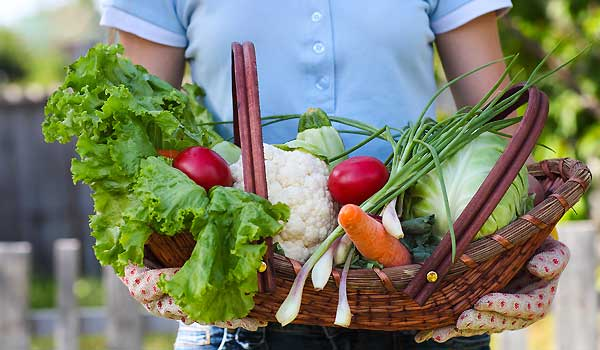 Vegetable Gardening: How To Grow Healthy and Fresh Veggies
