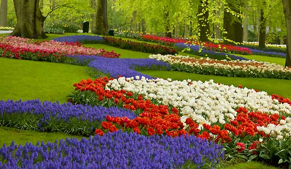 Flower Gardening - Annuals, Perennials And Bulbs
