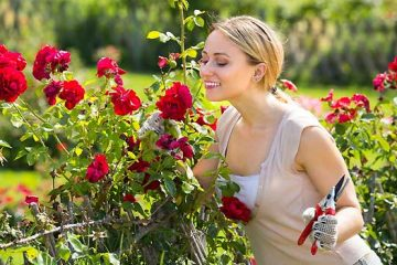 Rose Gardening - Planting, Growing And Caring For Roses