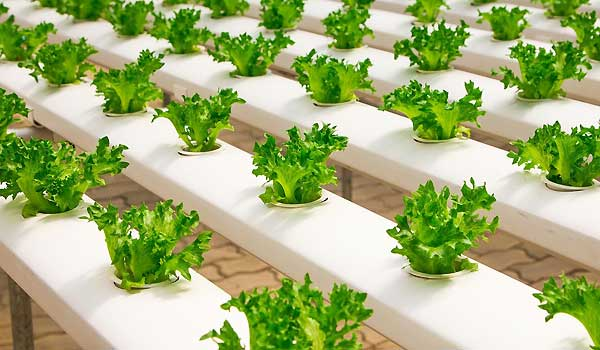 Hydroponic Gardening - Growing Herbs, Vegetables & Fruits Hydroponically